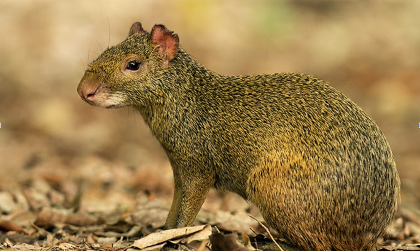 A colorful rodent