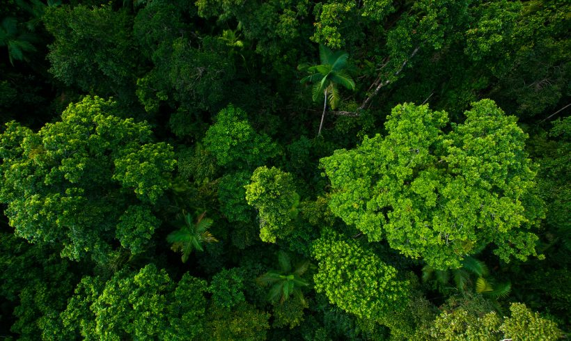 4 tips on building a comfortable house in the jungle